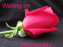 Waiting on Wednesday Pink Rose 2
